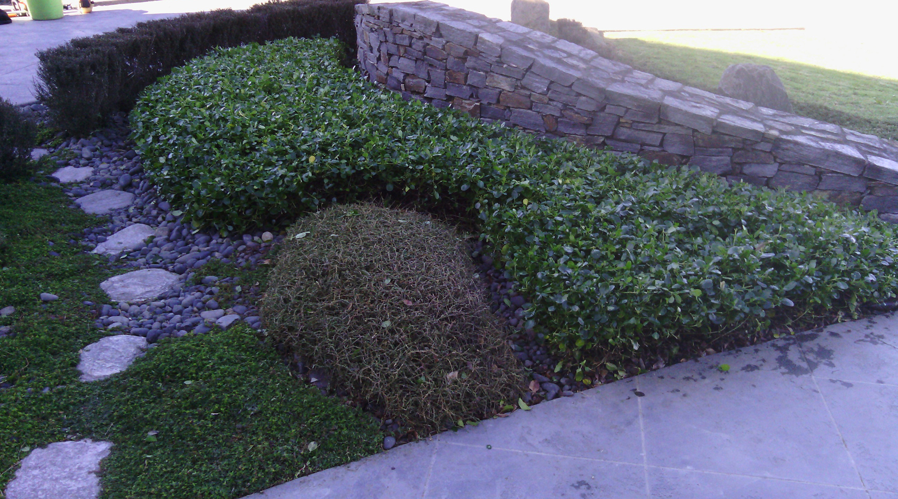 Landscape gardening services silverdale landscape for General garden maintenance